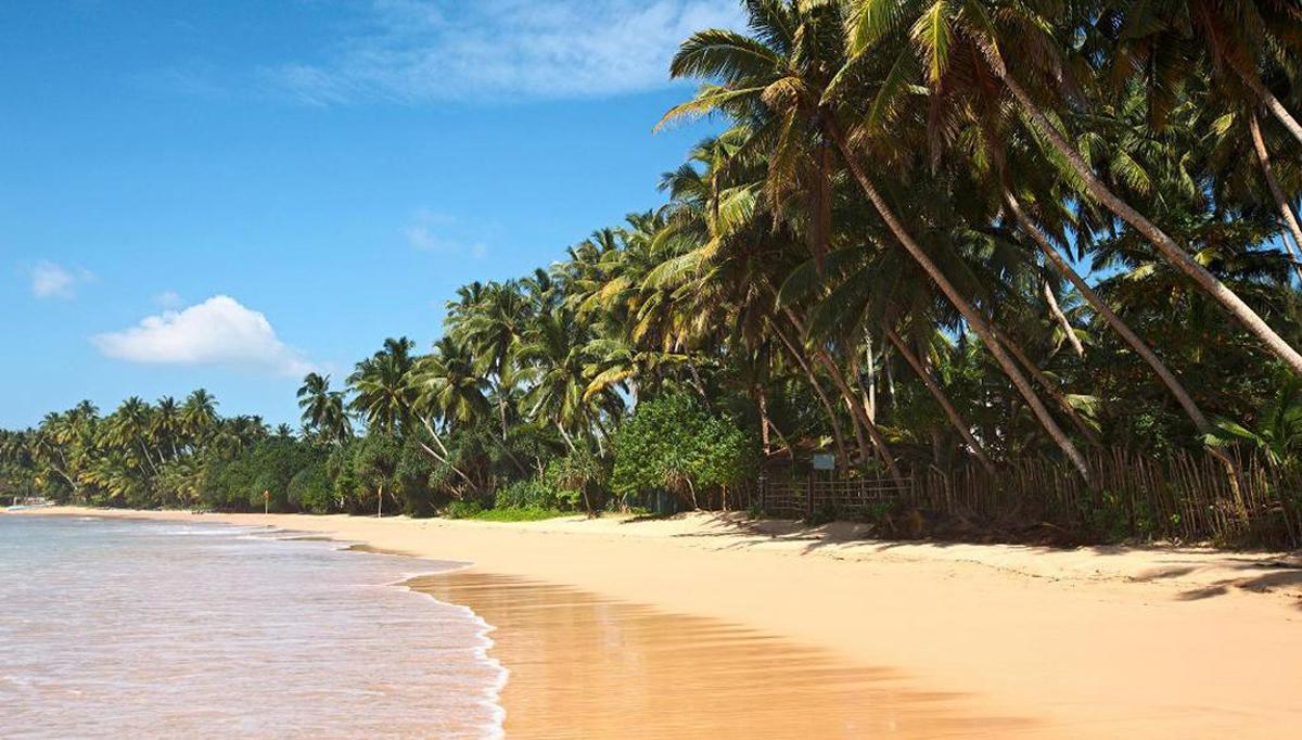 Нужна ли виза в Шри-Ланку: способы оформления, стоимость