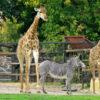 зоопарки России